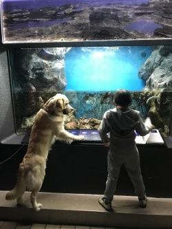 はじめての水族館
