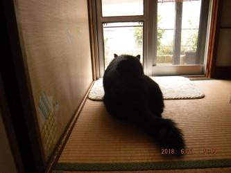 大きな猫🐱?