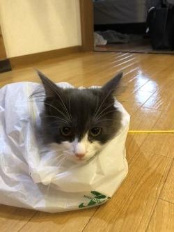 コンビニで猫を買いました。