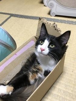 この箱は、捨てないでほしいニャン!