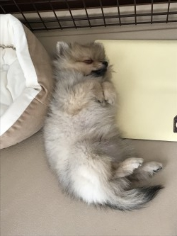 お昼寝❗️