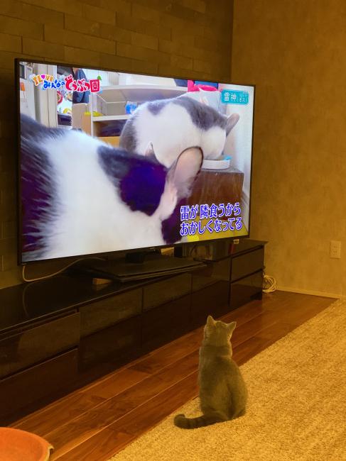 やっぱり猫がすきさんの写真 おべんきょうちゅうでし📖|みんなの ...