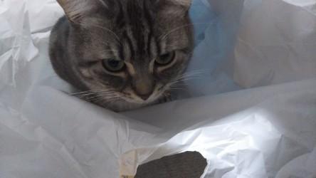 袋好きね(´・ω・`)