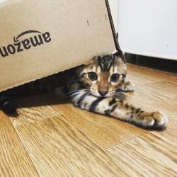 箱に隠れた